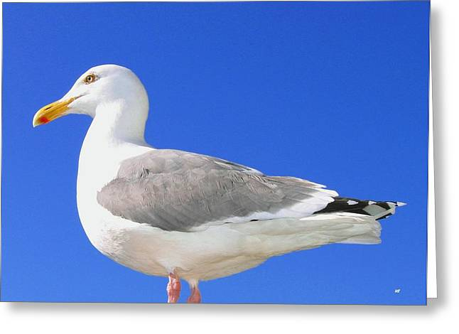Oregon Wild Life Greeting Cards - The Admiral Greeting Card by Will Borden