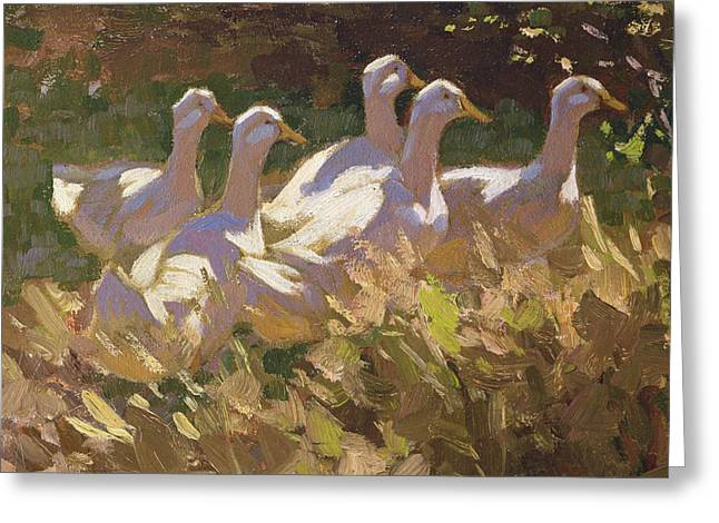 Ducklings Greeting Cards - The Adventurers Greeting Card by Edgar Downs