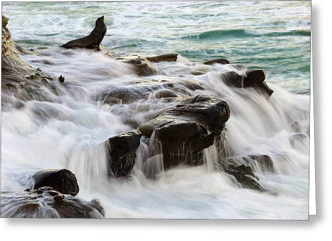California Sea Lions Greeting Cards - The Advocate Greeting Card by Joe Doherty