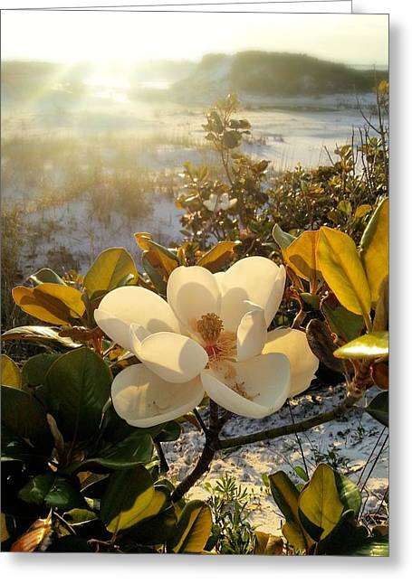 Magnolia Grandiflora Greeting Cards - The Afternoon Sun Greeting Card by JC Findley