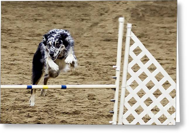 Speed Trials Greeting Cards - The Agile Border Collie Greeting Card by Janice Rae Pariza