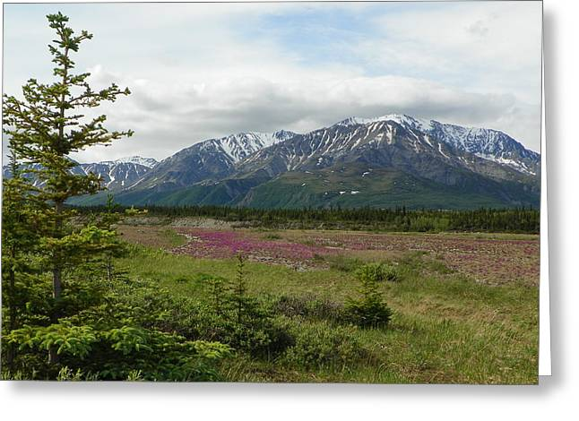 Jennifer Kimberly Greeting Cards - The Alaska Range Greeting Card by Jennifer Kimberly