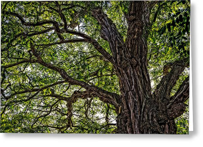 Ent Greeting Cards - The All Seeing Tree Greeting Card by Ken Stanback