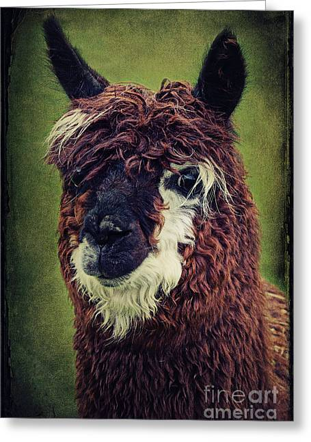 Alpaca Greeting Cards - The Alpaca  Greeting Card by Angela Doelling AD DESIGN Photo and PhotoArt