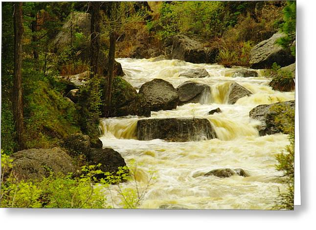 Elk Rapids Greeting Cards - The Amsden River Wyoming Greeting Card by Jeff  Swan