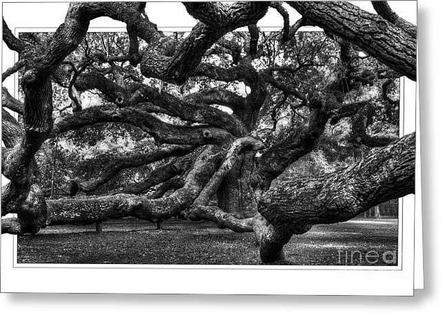 St Helena Island Greeting Cards - The Angel Oak Tree Greeting Card by Randy Brown