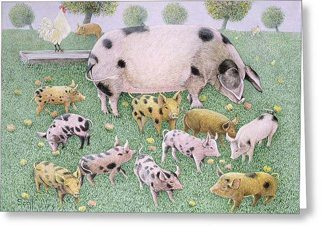 Piglets Greeting Cards - The Apple Feast Oil On Canvas Greeting Card by Pat Scott