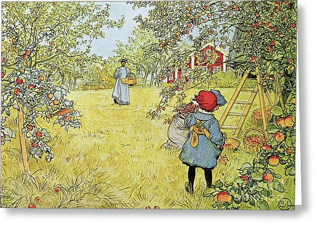 Apple Orchards Greeting Cards - The Apple Harvest Greeting Card by Carl Larsson