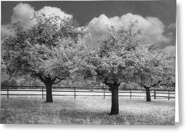 Swiss Photographs Greeting Cards - The Apple Orchard Greeting Card by Debra and Dave Vanderlaan