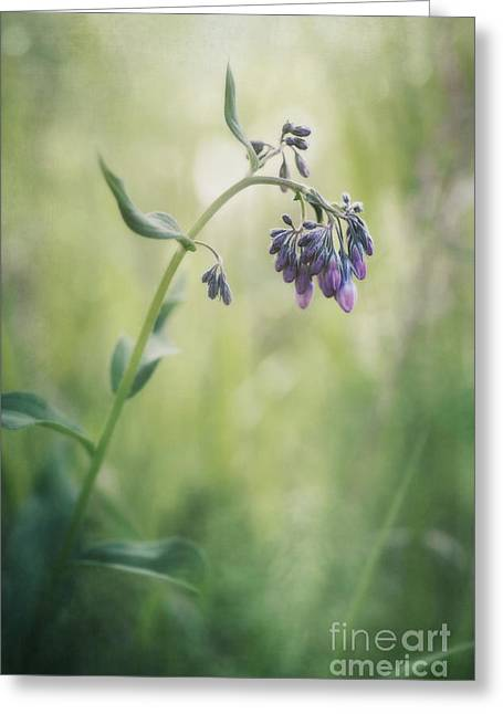 Grasses Greeting Cards - The Arrival Of Spring Greeting Card by Priska Wettstein