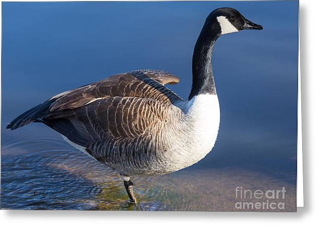 Print On Canvas Greeting Cards - The Art of Balance Greeting Card by Mary Lou Chmura