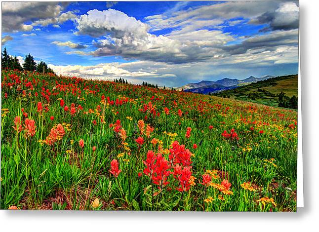 Wildflower Photos Greeting Cards - The Art of Wildflowers Greeting Card by Scott Mahon