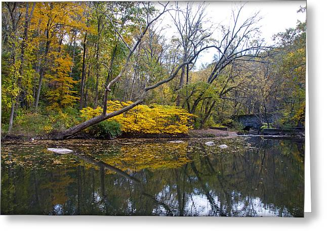 Artistry Greeting Cards - The Artistry of Nature Greeting Card by Bill Cannon