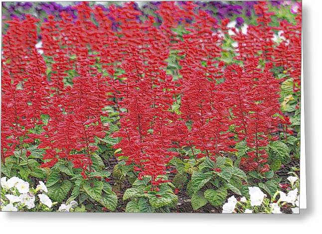 Ohio ist Digital Greeting Cards - The Artists Garden Greeting Card by Dan Sproul