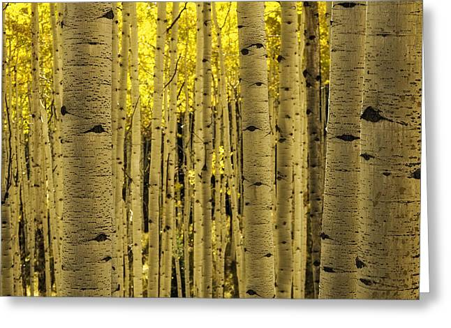 Scenic Drive Greeting Cards - The Aspen Tree Forest Greeting Card by Teri Virbickis