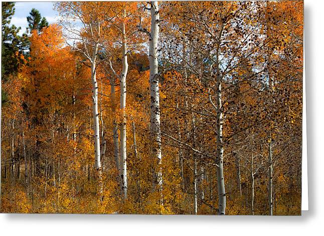 Turning Leaves Photographs Greeting Cards - The Aspens Greeting Card by Sean Ramsey