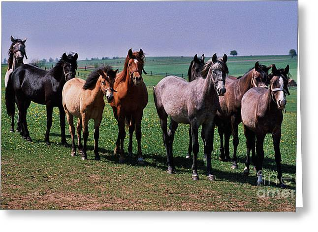 Filly Art Greeting Cards - The Audience Greeting Card by Angel  Tarantella