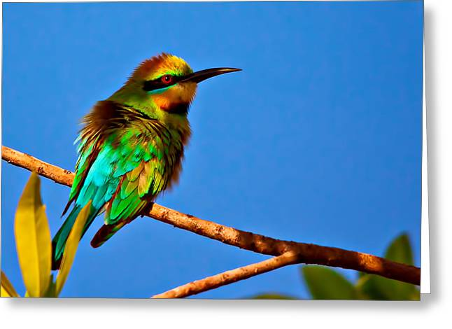 Australian Bees Greeting Cards - The Australian Honey Bee Eater Greeting Card by Dr K X Xhori
