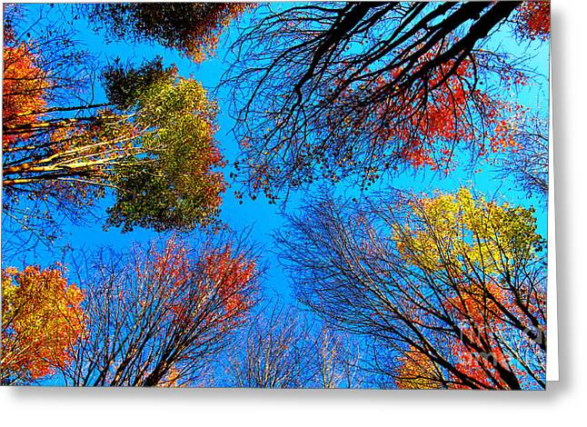 The Autumn Leaves At Potato Creek Greeting Card by Tina M Wenger