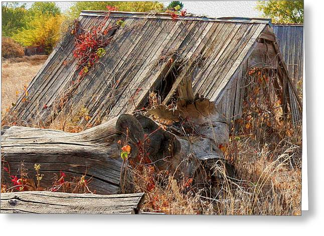 Bill Kesler Greeting Cards - The Autumn Of Nebraska - Artistic Greeting Card by Bill Kesler