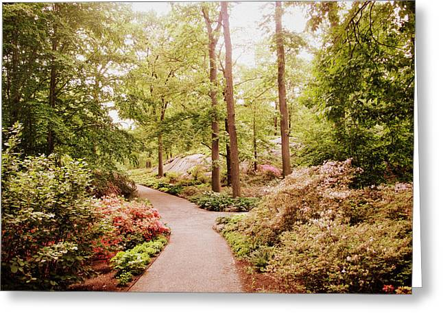 Flower Blossom Greeting Cards - The Azalea Path Greeting Card by Jessica Jenney