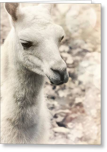 Llama Photographs Greeting Cards - The Bachelorette Greeting Card by Darlene Kwiatkowski