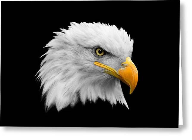 Bald Eagles Greeting Cards - The Bald Eagle Greeting Card by Mark Rogan