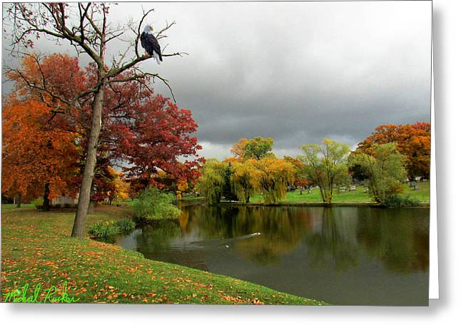 Repository Greeting Cards - The Bald Eagle Greeting Card by Michael Rucker