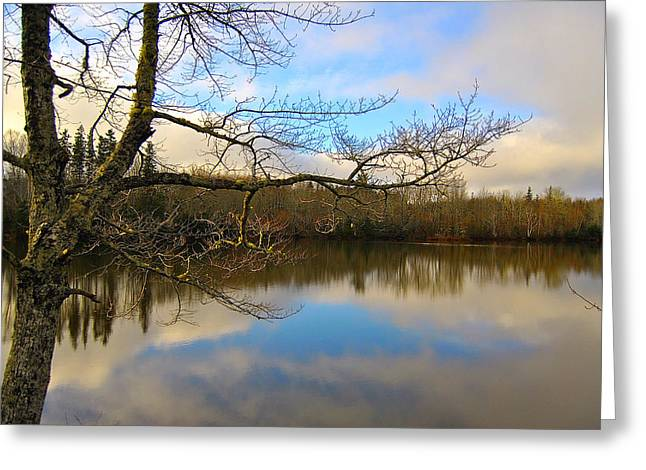 Reflections Of Sky In Water Greeting Cards - The Bare and The Beautiful Greeting Card by Kathleen Sartoris