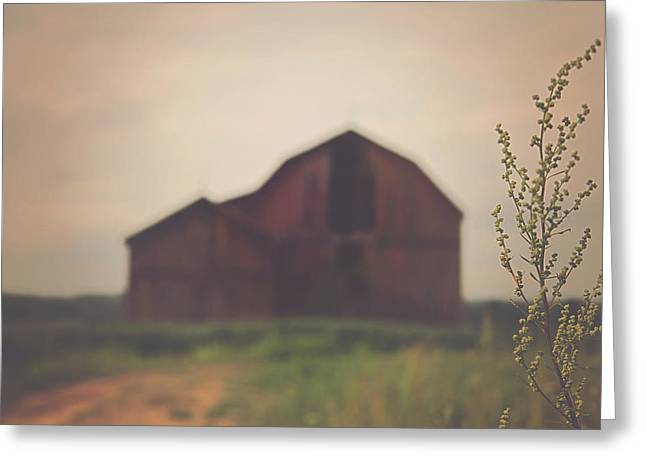 Red Barn Greeting Cards - The Barn Daylight Version Greeting Card by Carrie Ann Grippo-Pike