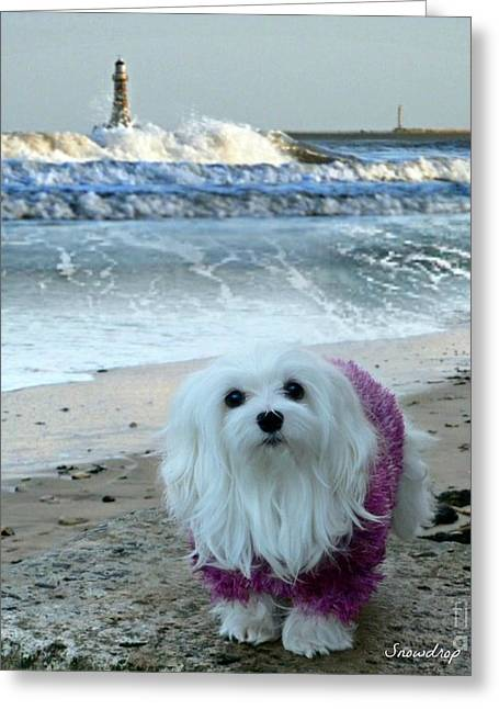 Maltese Mixed Media Greeting Cards - The Beach in Winter Greeting Card by Morag Bates