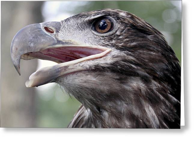 Photographic Greeting Cards - The Beak Greeting Card by Bob Slitzan