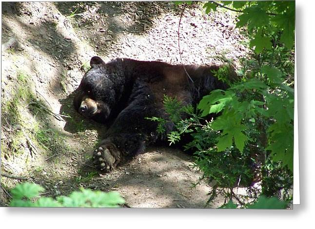 The Bear 2 Greeting Card by Heather L Wright