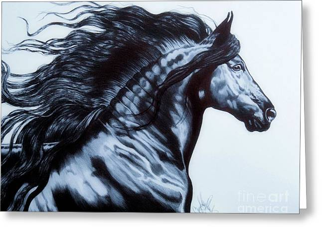 Horse Drawing Greeting Cards - Frederik the Great - Beautiful Friesian   Greeting Card by Cheryl Poland