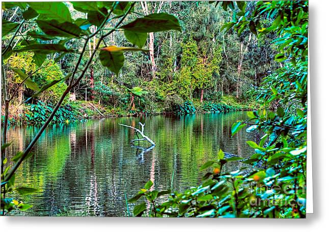 Tree Leaf On Water Greeting Cards - The Beautiful Greens of Nature 2 Greeting Card by Kaye Menner
