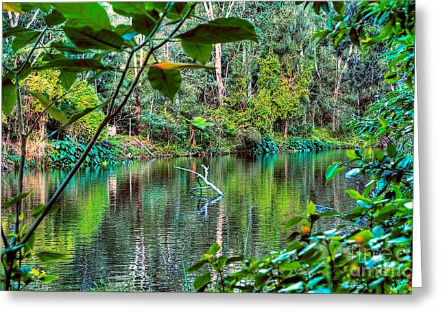 The Beautiful Greens Of Nature 2 Greeting Card by Kaye Menner