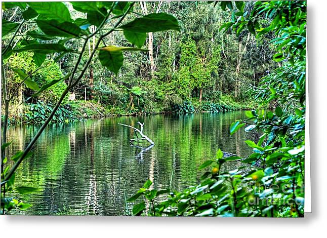 The Beautiful Greens Of Nature Greeting Card by Kaye Menner