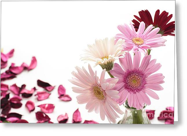 Many Pyrography Greeting Cards - The Beautiful Pink Gerbera Greeting Card by Boon Mee