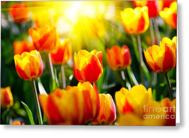 Show Pyrography Greeting Cards - The Beautiful Tulips Greeting Card by Boon Mee