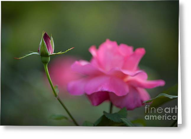 The Beauty And The Promise Greeting Card by Mike Reid