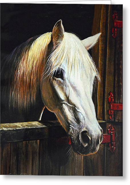 Sandi Oreilly Greeting Cards - The Beauty Of A White Horse Greeting Card by Sandi OReilly