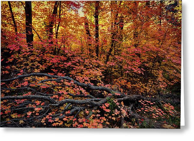 West Fork Greeting Cards - The Beauty of Autumn  Greeting Card by Saija  Lehtonen
