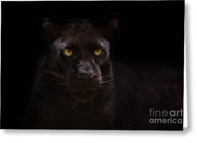 The Beauty Of Black Greeting Card by Ashley Vincent