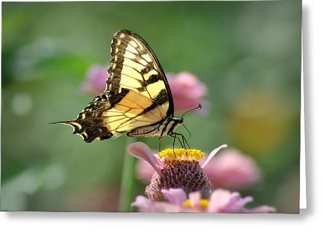 Beauty Of Nature Greeting Cards - The Beauty of Nature Greeting Card by Bill Cannon