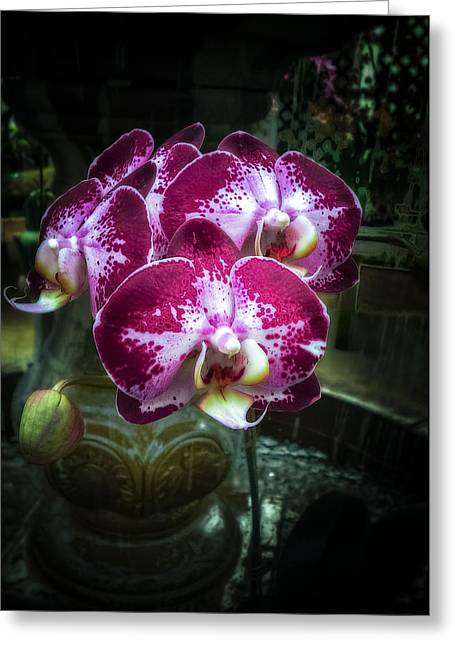 Pink And Lavender Greeting Cards - The Beauty of Orchids Greeting Card by Julie Palencia
