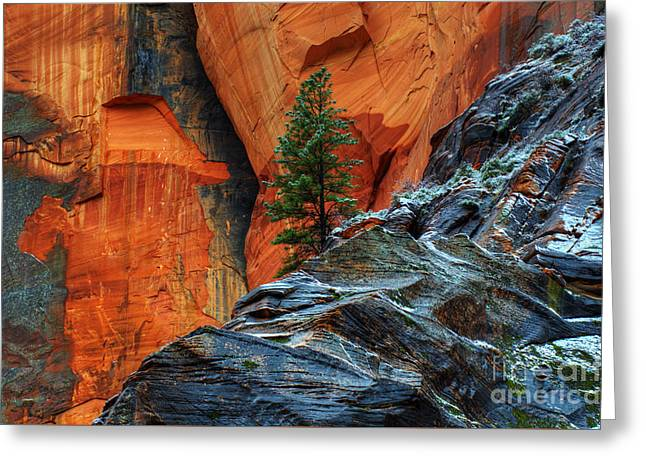 Canadian Photographer Greeting Cards - The Beauty Of Sandstone Zion Greeting Card by Bob Christopher