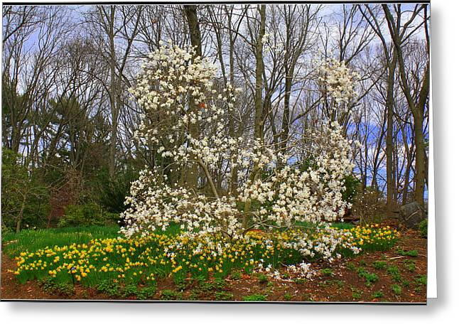 The Beauty Of Spring Greeting Card by Dora Sofia Caputo Photographic Art and Design