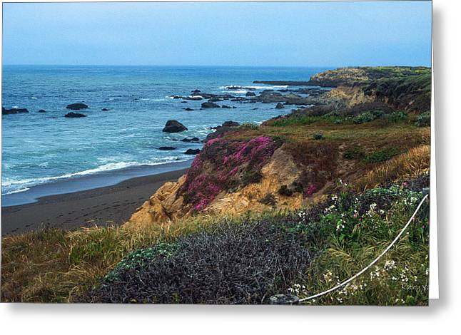 Moonstone Beach Greeting Cards - The Beauty of the Central Coast Greeting Card by Kathy Yates