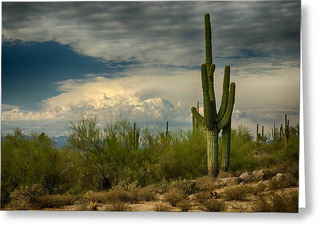 Monsoon Clouds Greeting Cards - The Beauty of the Desert Southwest  Greeting Card by Saija  Lehtonen