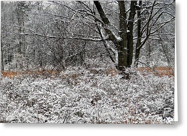 The Beauty of Winter Greeting Card by Aimee L Maher Photography and Art
